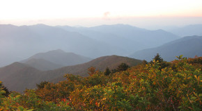 South Korean Forest Is Cut Down for the Olympics: Is Restoration Possible?