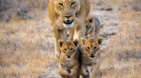 Wildlife Photo of the Week: The Walkabout