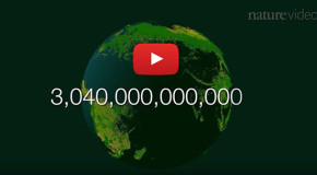 Video: Counting—and Counting On—the World's Trees