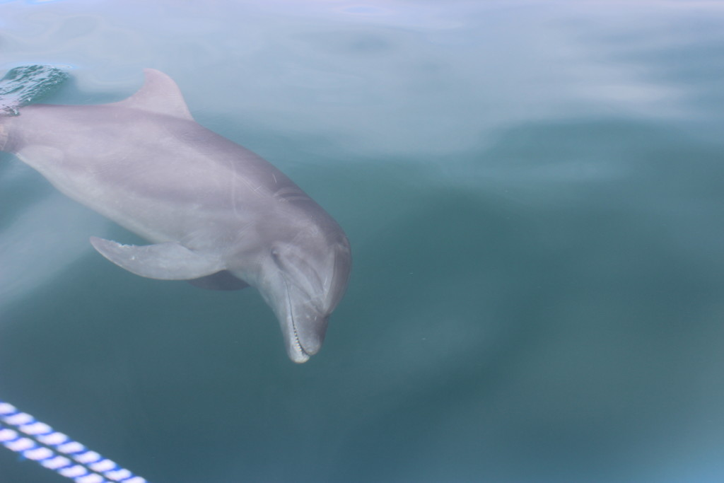 About 25 dolphin and whale species inhabit Costa Rica's oceans. © WWF-US/Abby Wadley