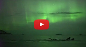 Happy Holidays 2015: Whales under the Northern Lights