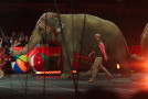 "Is Ringling Brothers Really ""Retiring"" Its Elephants?"