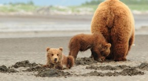 Finding Family Among Fellow Travelers in Alaska