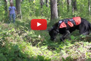 Video: Conservation Canines in Action