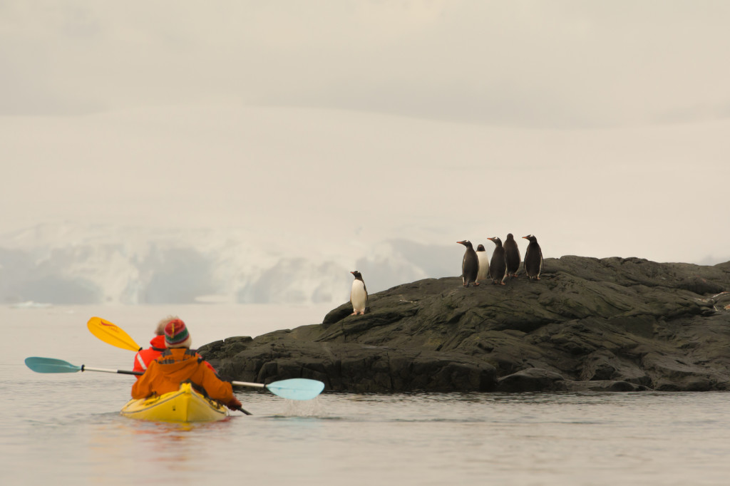 Kayakers observe a waddle of penguins in Antarctica