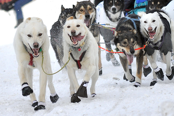 "The modern Iditarod Trail Sled Dog Race commemorates the ""Great Race of Mercy,"" the trail itself and the sled-dog culture. ©John Pennell/JBER PA), flickr"
