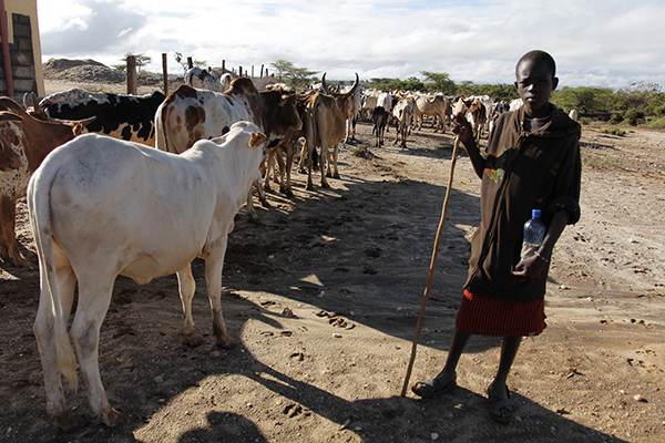 In Samburu County, Kenya, climate change means less rain. Pastoralists must travel farther to find pasture for their animals, mostly cows. Combined with an influx of small arms in the area, this pressure has intensified competition for resources and violence between local groups, such as the Samburu and Turkana peoples. ©Edward Harris, flickr