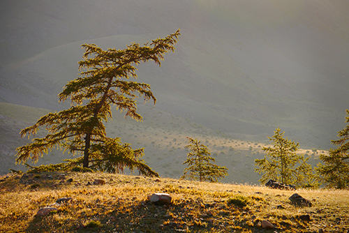 """In drought conditions, trees sound off in """"cries for help."""" ©Eric Rock"""