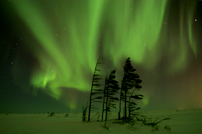 An eerie view of the aurora borealis with silhouettes of trees