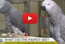 Video: Could a Parrot Be a Credible Murder Trial Witness?