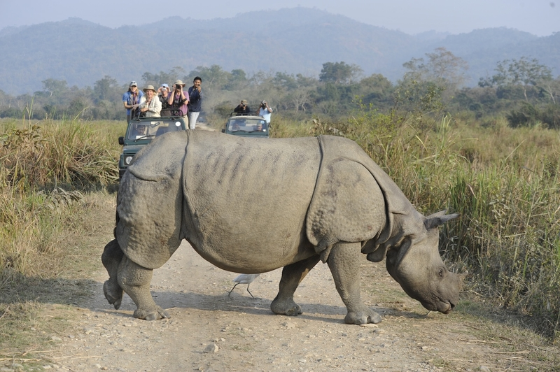 A rhino seen on safari in India