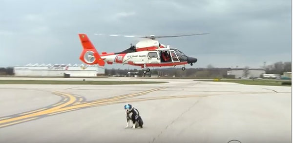 From 1990 to 2013, there were 279 human injuries attributed to wildlife strikes with U.S. civil aircraft. Dogs such as Piper are working to change that. ©Video by CBS Evening News