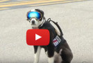 Video: Piper, the Airport Runway Dog