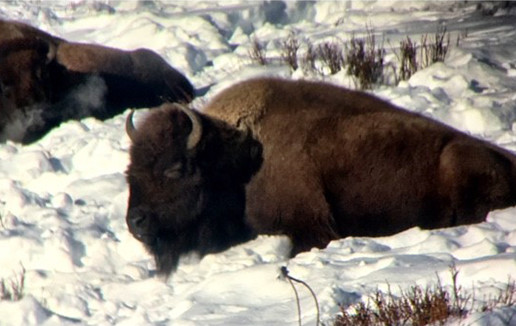 The Sounds of Yellowstone