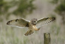 Wildlife Photo of the Week: Landing Gear Down
