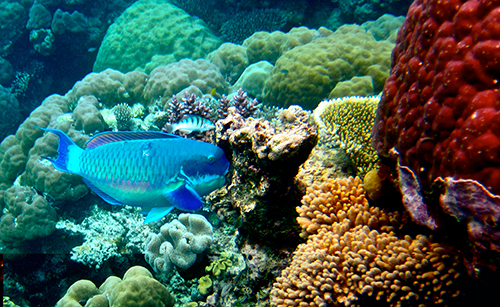 The Great Barrier Reef comprises more than 3,000 individual reef systems and coral cays, hundreds of tropical islands and an abundance of marine life. ©Kyle Taylor, flickr