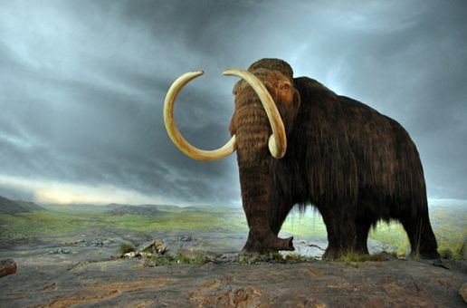 Protecting the Woolly Mammoth to Save Today's Elephants