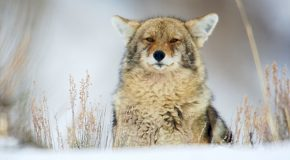 Attitudes Toward Wildlife: the Right Kind of Caring?