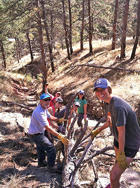 NHA Group Moving a Tree