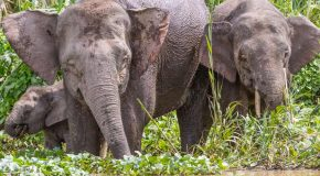 Top 5 Most Exotic, Endangered Creatures—Borneo Unleashed
