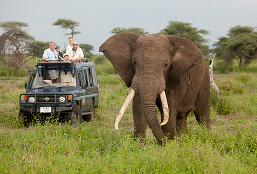 Elephant viewing is big business. When they start to disappear, Africa loses millions in tourism revenue. ©Dave Luck