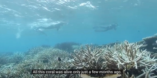 "Some researchers are hoping that heat-tolerant microalgae could eventually help corals better adapt to global warming. ©From the video ""Tim Flannery: Reef Reality Check"" by Climate Council"