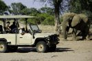 New Research: Elephant Conservation Brings Economic Value through Tourism Revenue