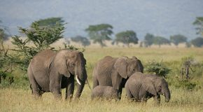 Bad Economics: Pachyderm Poaching and Refuge Reductions