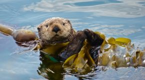 Wildlife Photo of the Week: Busy Otter