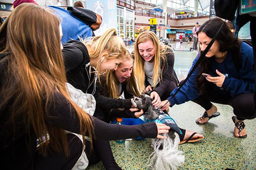 Research shows that the simple act of petting an animal has health benefits for humans. ©Denver International Airport/Facebook