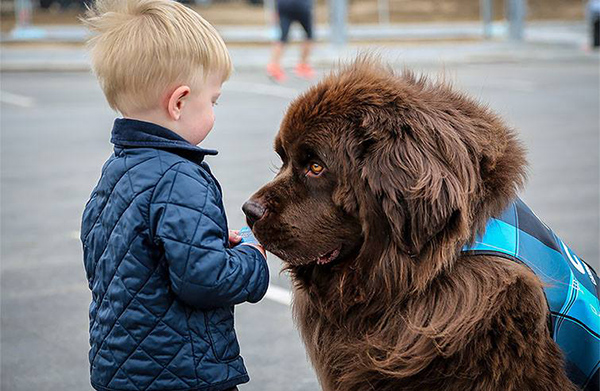 A member of the Canine Airport Therapy Squad (CATS) at Denver International Airport captivates a young traveler. ©Denver International Airport/Facebook