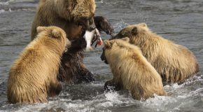 Wildlife Photo of the Day: Feeding the Kids