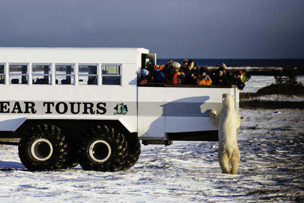 Tourists in Churchill, Manitoba, Canada observe a polar bear. © WWF-US/Elisabeth Kruger