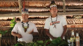 Conservation and Traditional Medicine in the Amazon