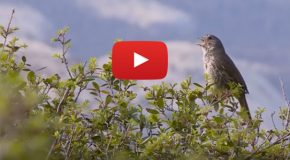 "Video: ""Hearing Beyond"" in Natural Landscapes"