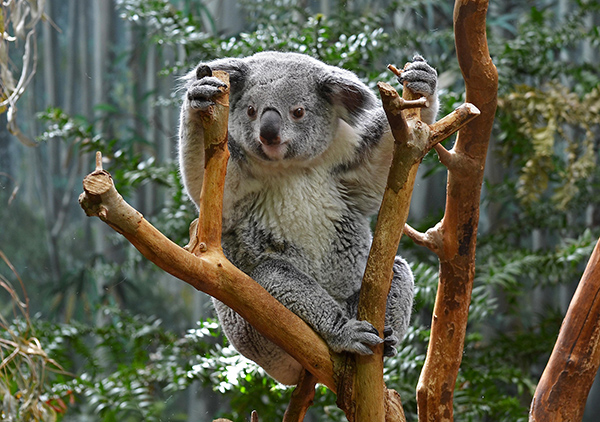 Some Australian environmentalists are proposing that wild animals be leased to private landowners, philanthropists and enterprises as a way to raise money for conservation efforts. ©LilyRose97, flickr