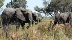 Travels Through the Okavango Delta and Gomoti