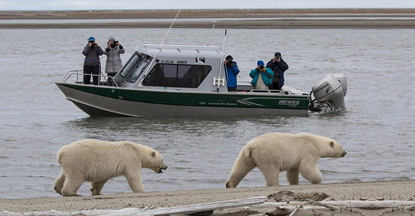 Polar Bear Boat Tour in Kaktovik Alaska