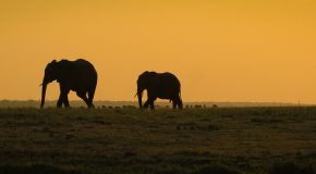 Wildlife Photo of the Week: Chobe River Sunset