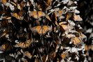 Enter Our Monarch Butterfly Adventure Giveaway!