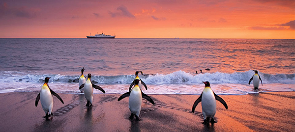 See Penguins in Antarctica