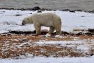 The Reality of Polar Bears and Climate Change