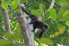 Traveler Story: Natural Jewels of Costa Rica