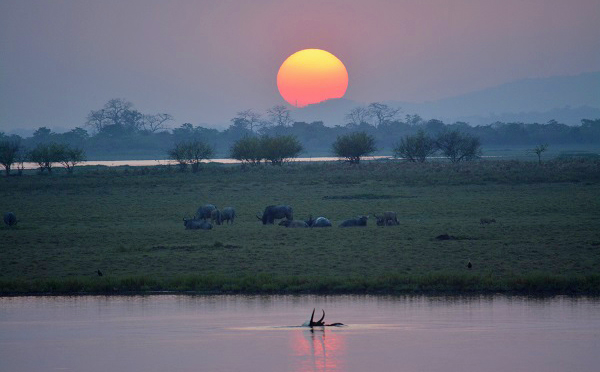 Sunset on an Indian safari