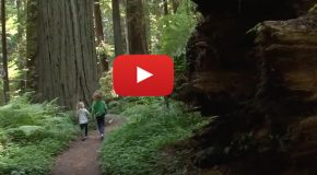 Video: The Health Benefits of Forest Bathing