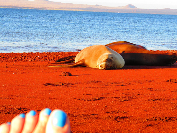 Santa Cruz Island, Rabida. Deep maroon beaches with sleeping sea lions.