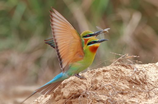 Wildlife Photo of the Week: Riots of Natural Colours