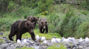 Alaska in July or August: When to Go?