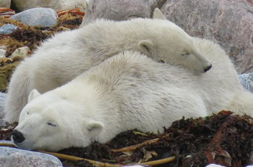 A Different World in the Polar Bear Capital