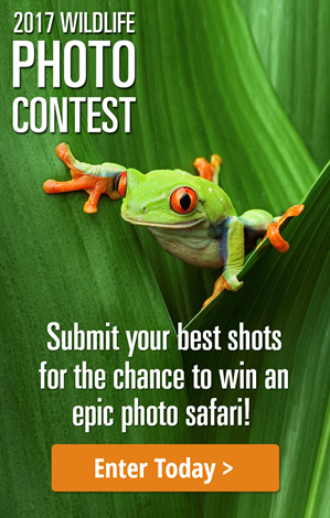 2017-wildlife-photo-contest